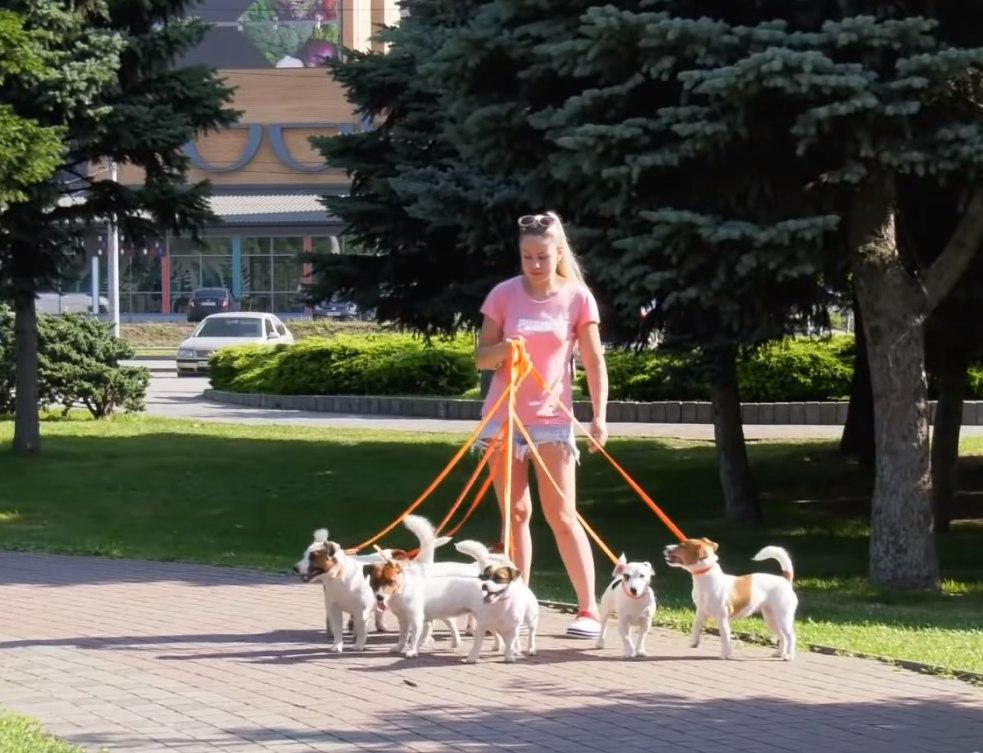 у Дніпрі собаки прибирають сміття
