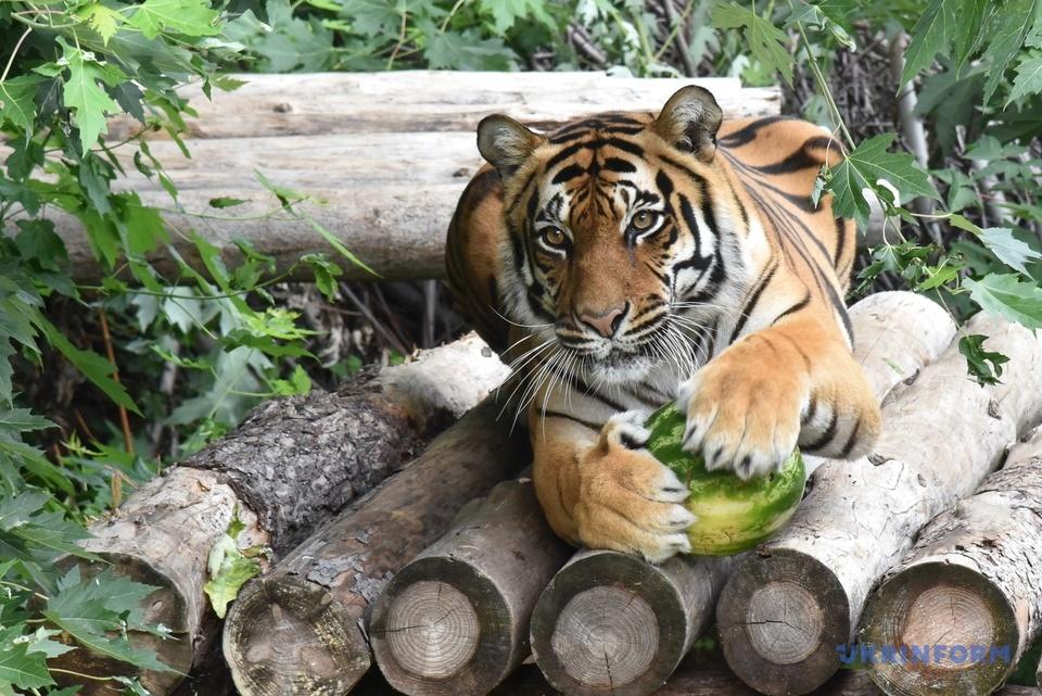 Кавуновий тиждень Київ зоопарк