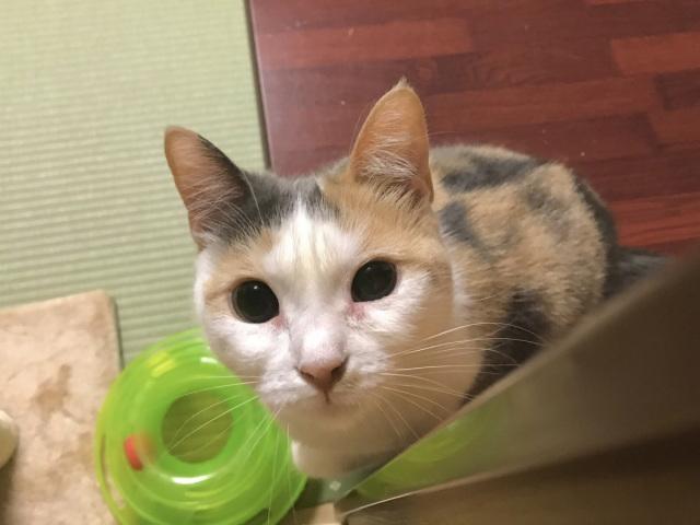 В Японії готель пропонує провести ніч з котом