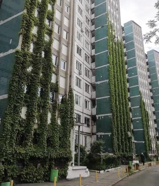 вертикальне озеленення