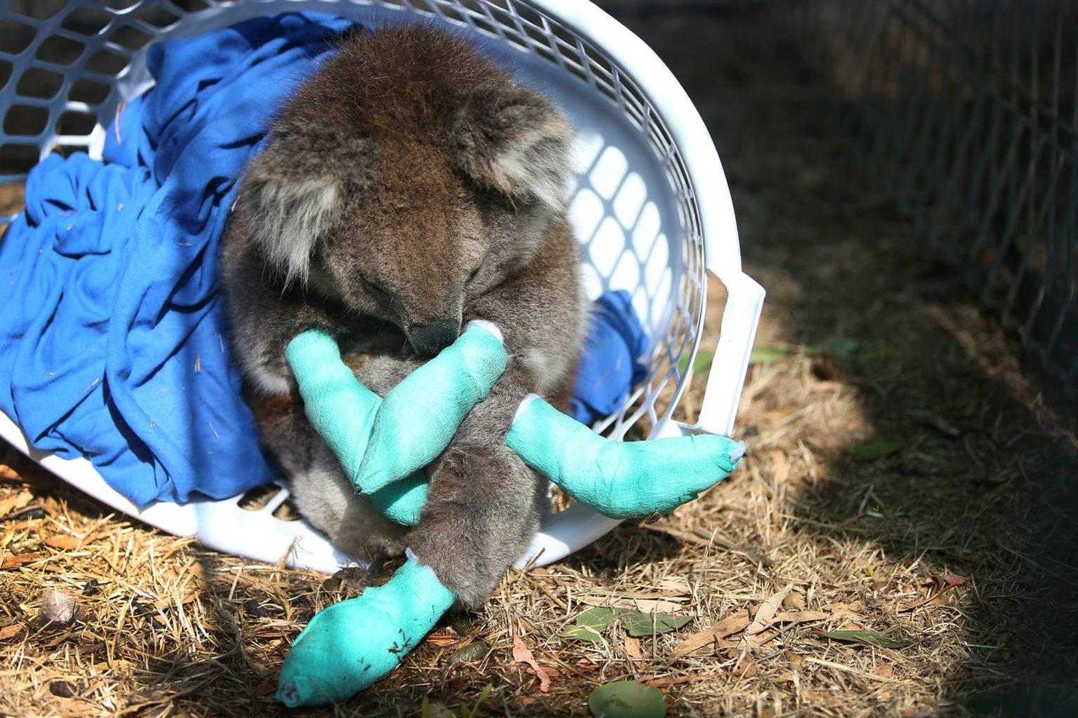 В Австралії від лісових пожеж постраждали і загинули близько 3 млрд тварин