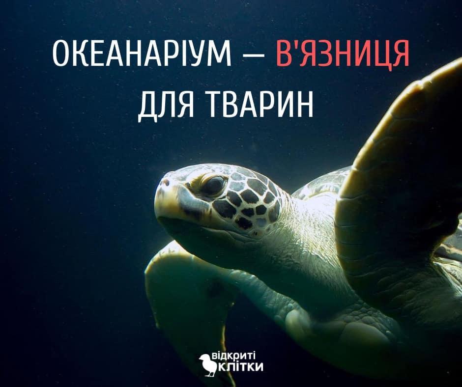 Що не так з океанаріумом? Підводні камені водних зоопарків