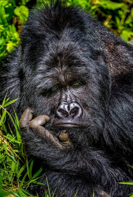 Comedy Wildlife Photography Awards 2020