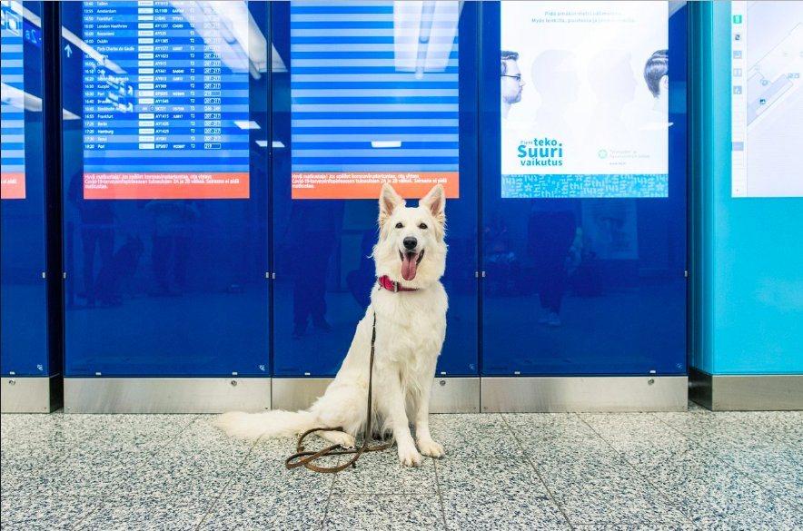 собаки виявляють коронавірус