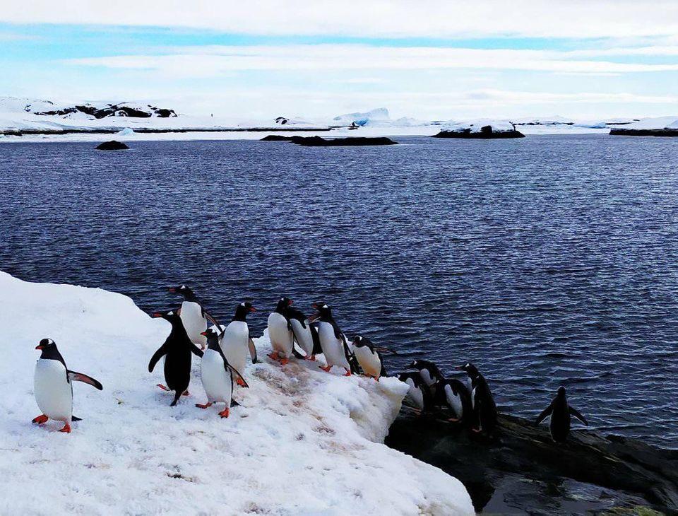 Пінгвіни вишикувалися в чергу біля антарктичної станції Вернадський