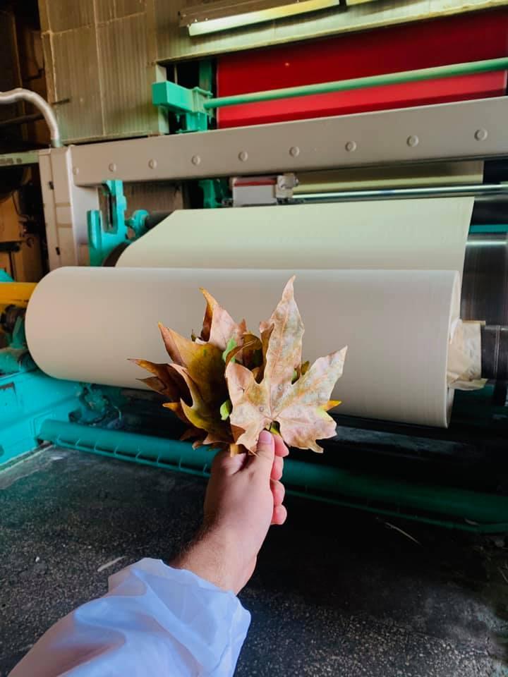 В Україні випустили першу промислову партію паперу з опалого листя