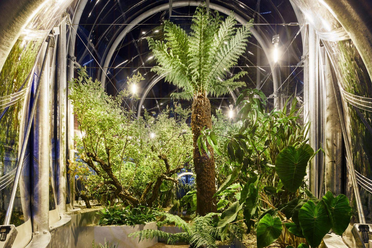 У Лондоні встановили теплицю з тропічними рослинами