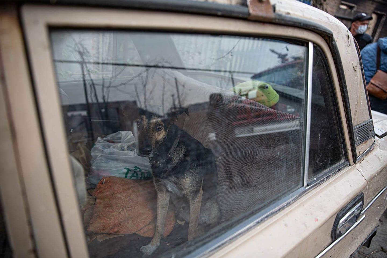врятована від пожежі собака