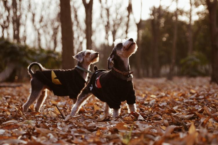 Прогулянки з собаками