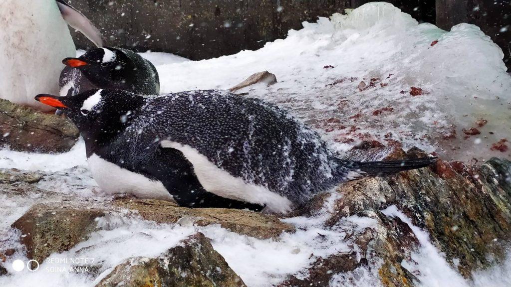 пінгвіни Антарктида