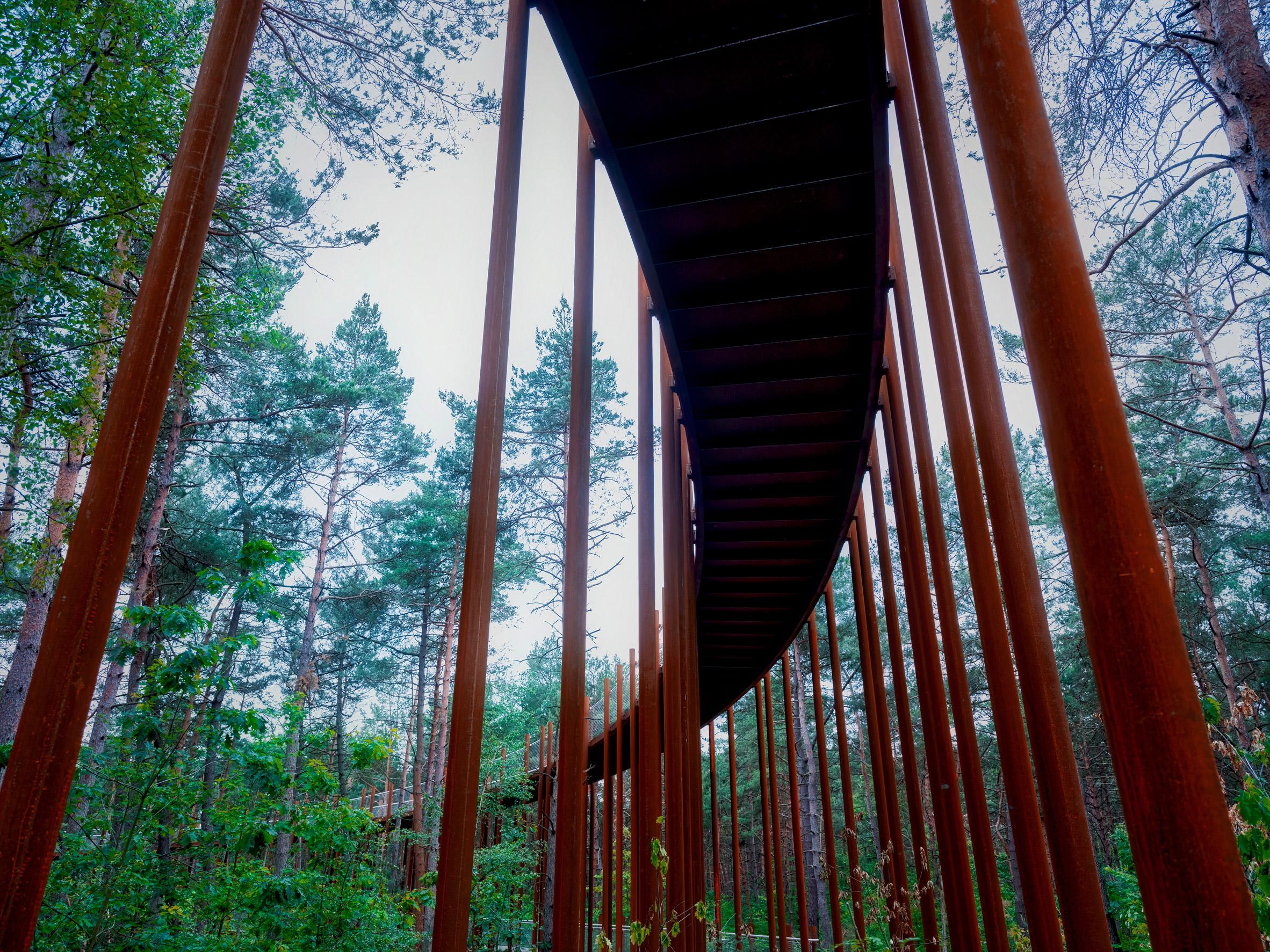 Бельгійські архітектори проклали веломаршрут між верхівками дерев: фото