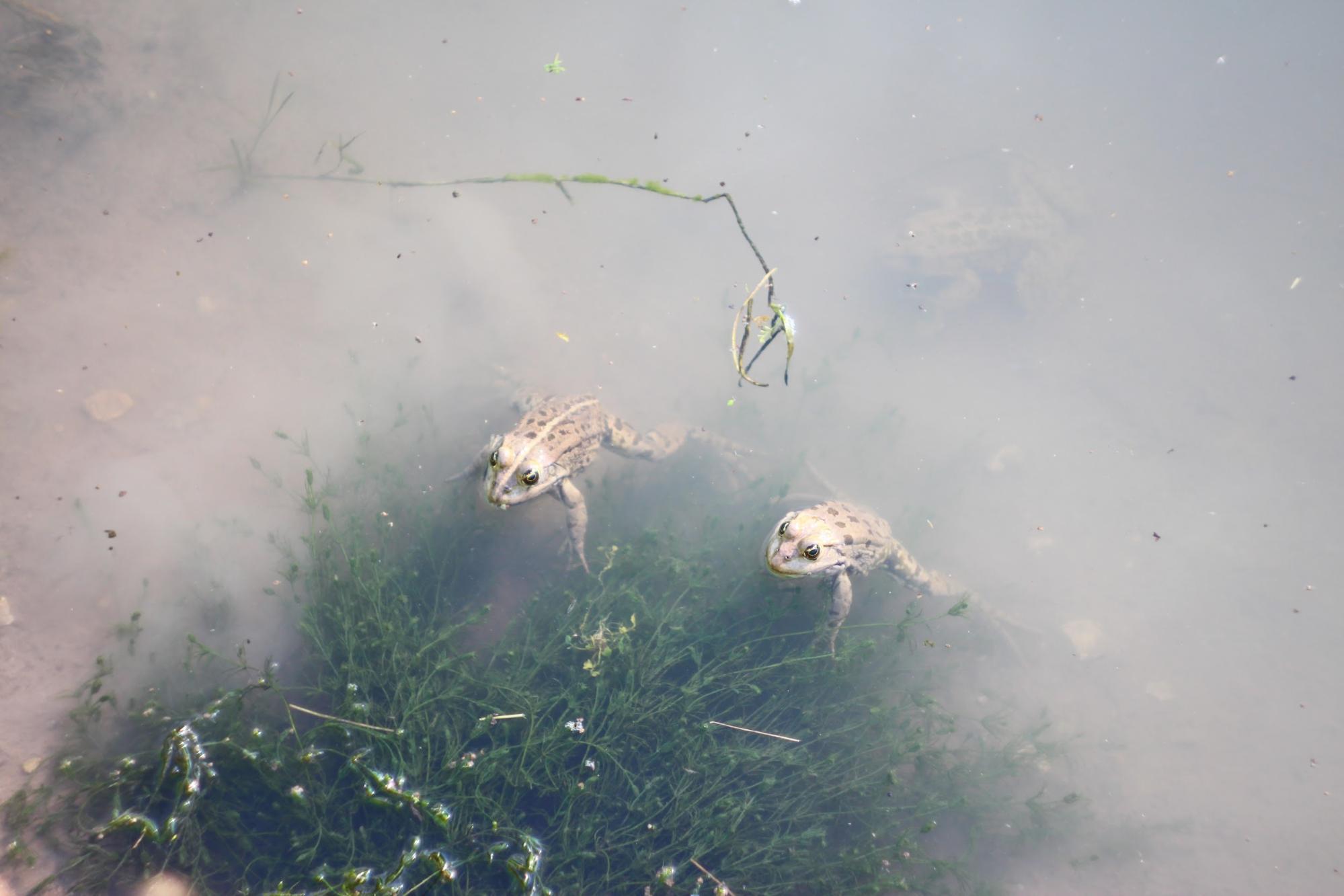 равлики львівщина