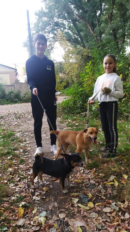 як завести собаку дітям