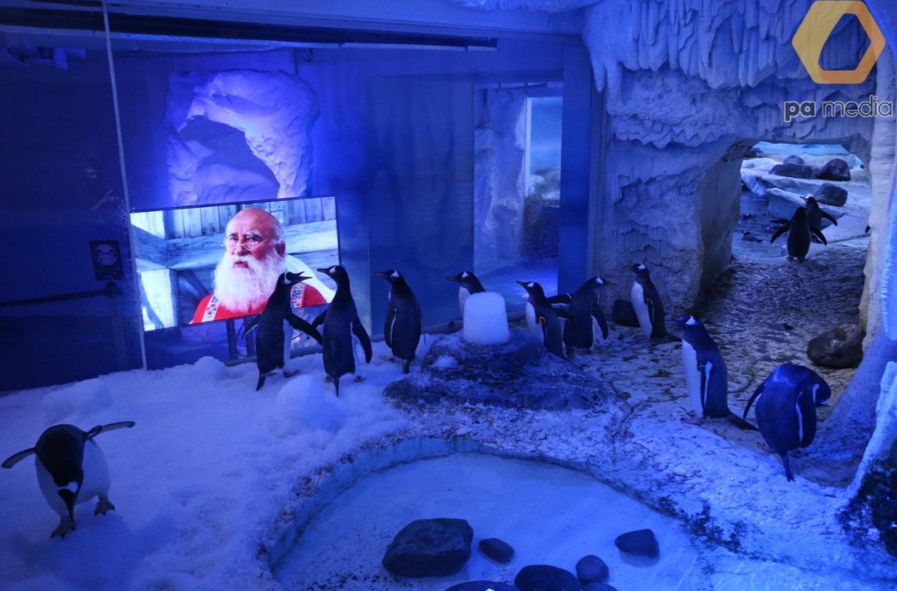Лондонський акваріум показує пінгвінам різдвяні фільми