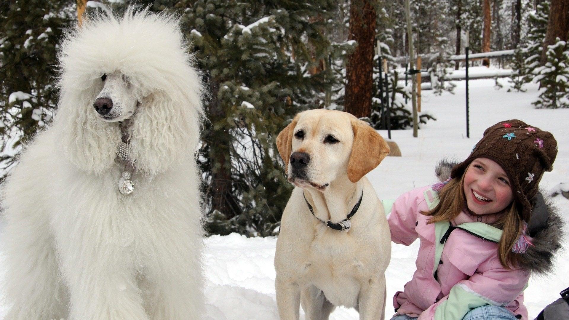 Пес, який врятував Різдво