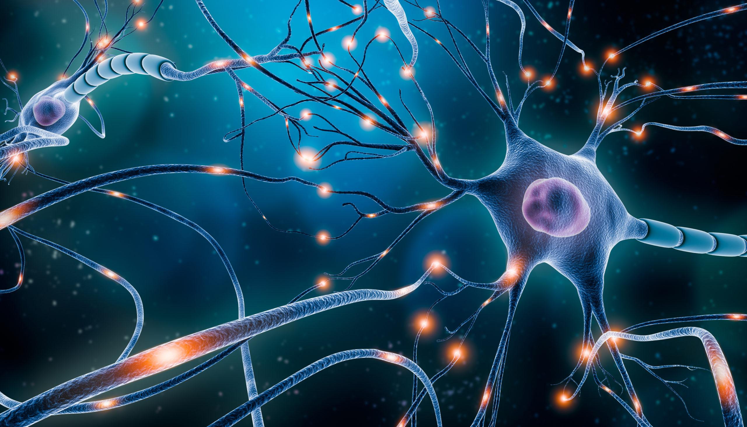 Нервові клітини