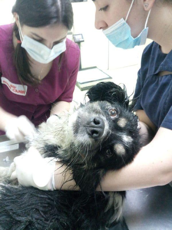 У новорічну ніч у Києві травмувалися кілька тварин, які злякалися феєрверків