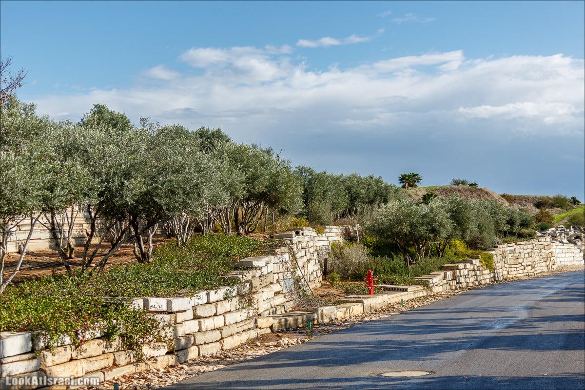В Ізраїлі найбільший сміттєвий полігон країни перетворили на екопарк