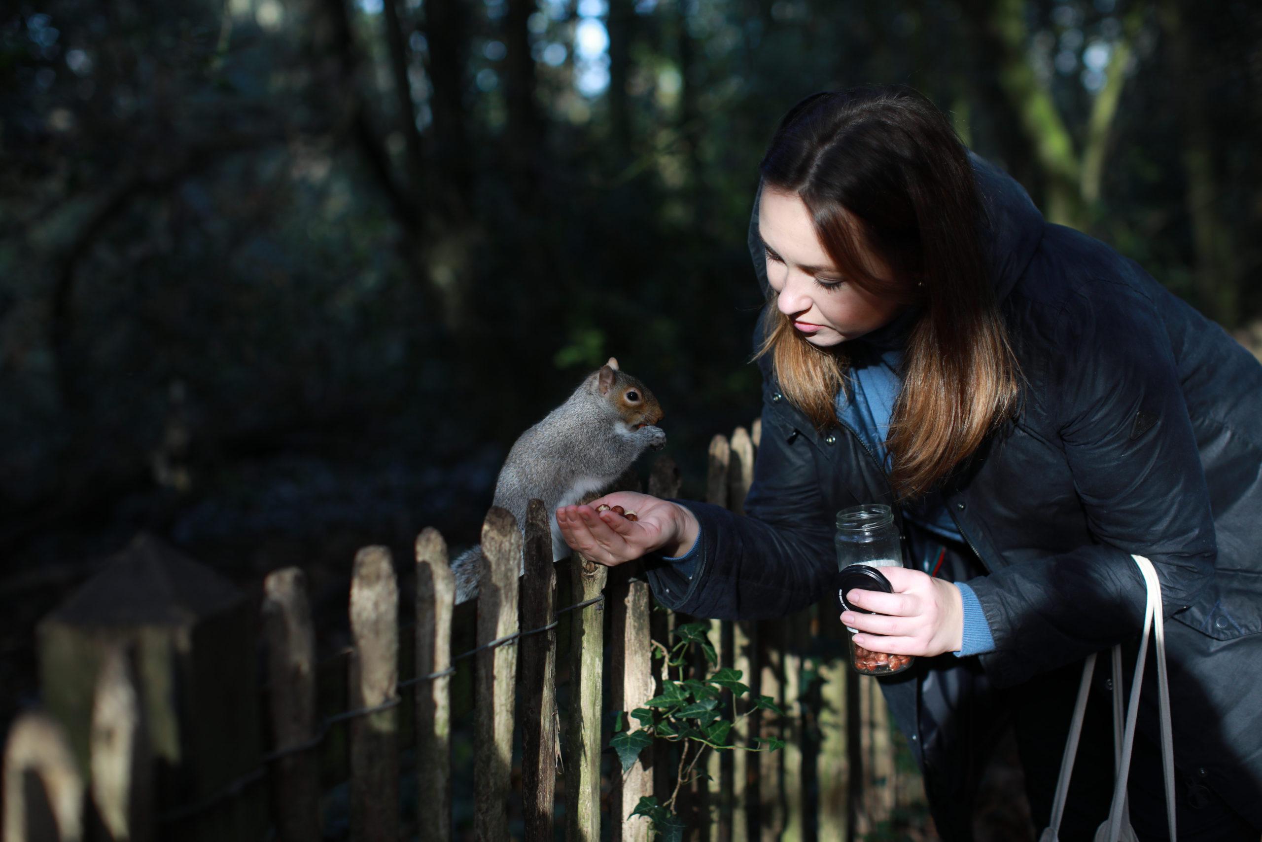 Як врятувати ліс: історія київської громади, якій вдалося