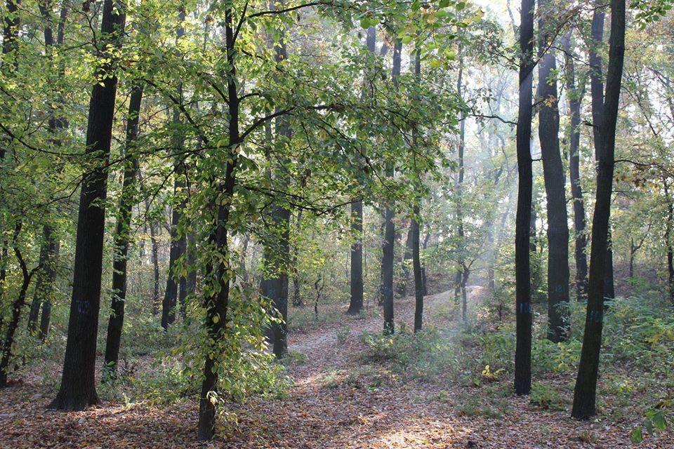 Вумовский лес