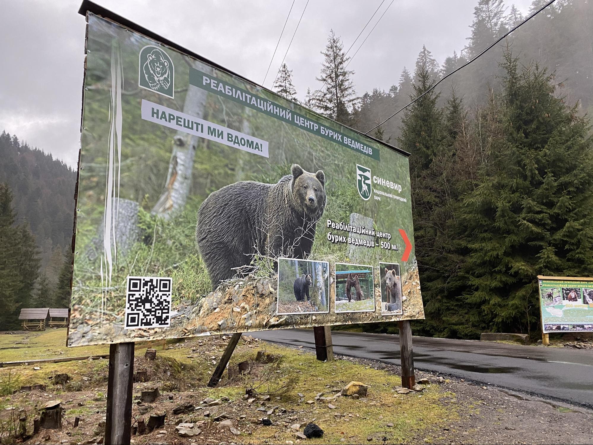 Реабілітація для ведмедів: як на Закарпатті рятують червонокнижний вид