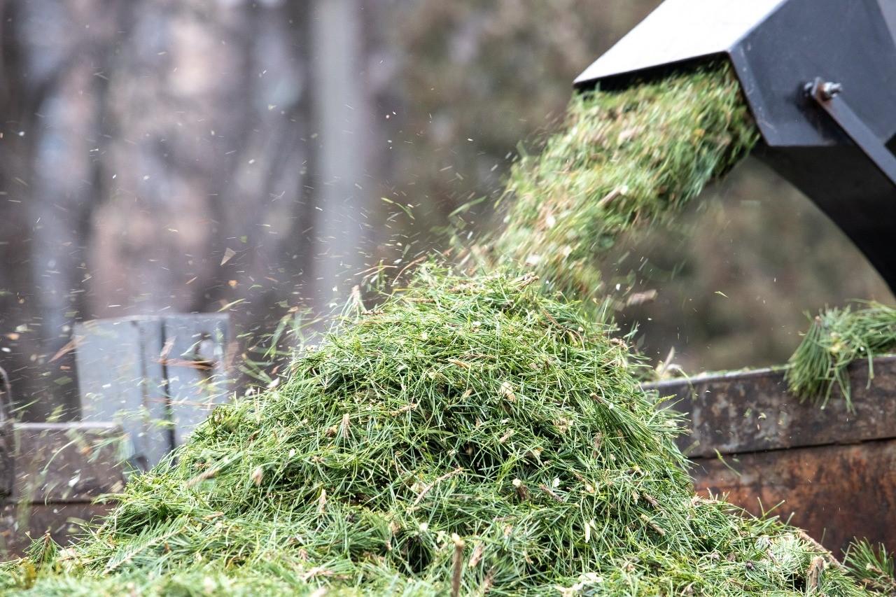 Кияни здали на екологічну утилізацію 6,5 тисячі новорічних ялинок