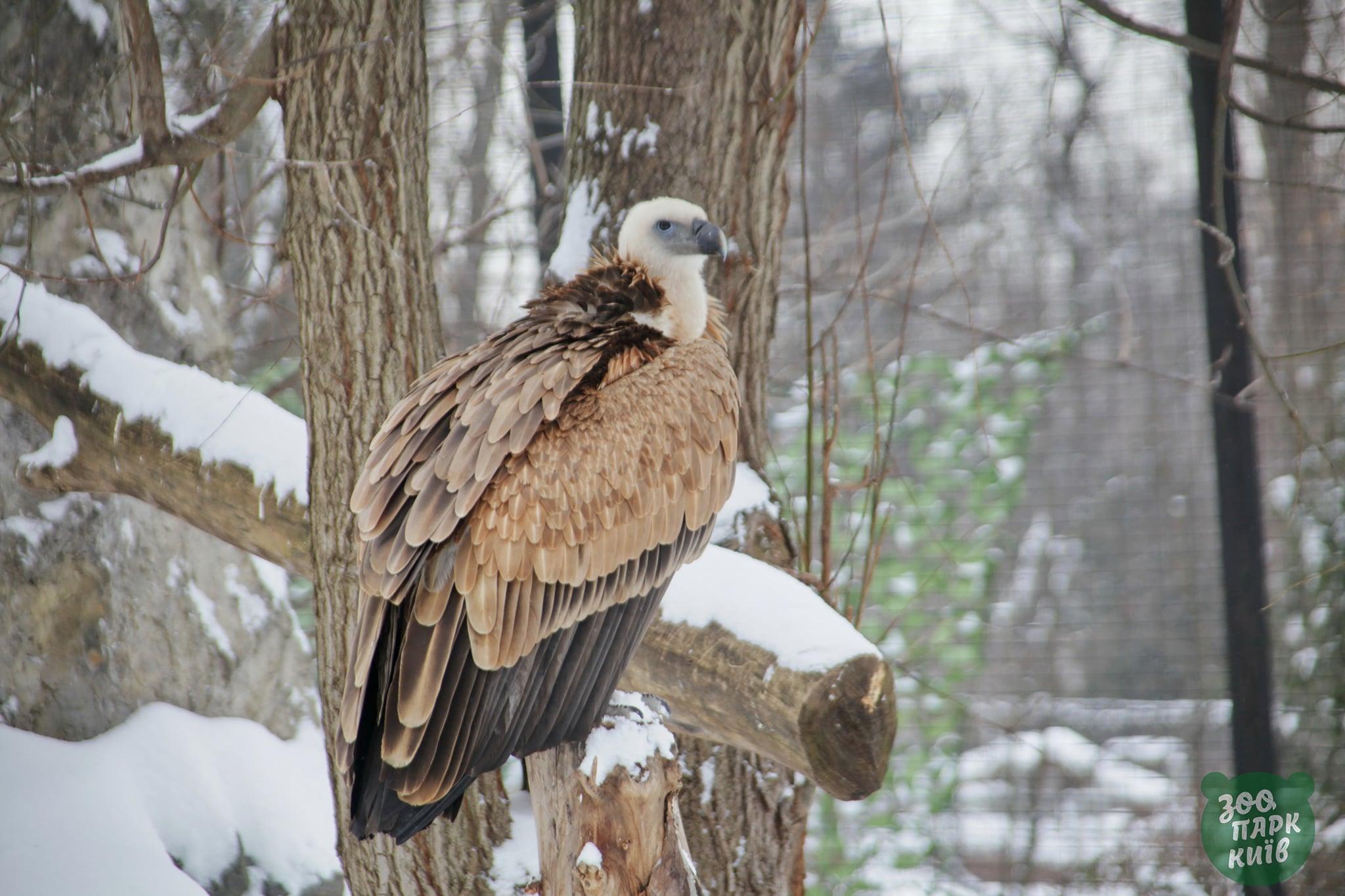 київ зоопарк зима сніг