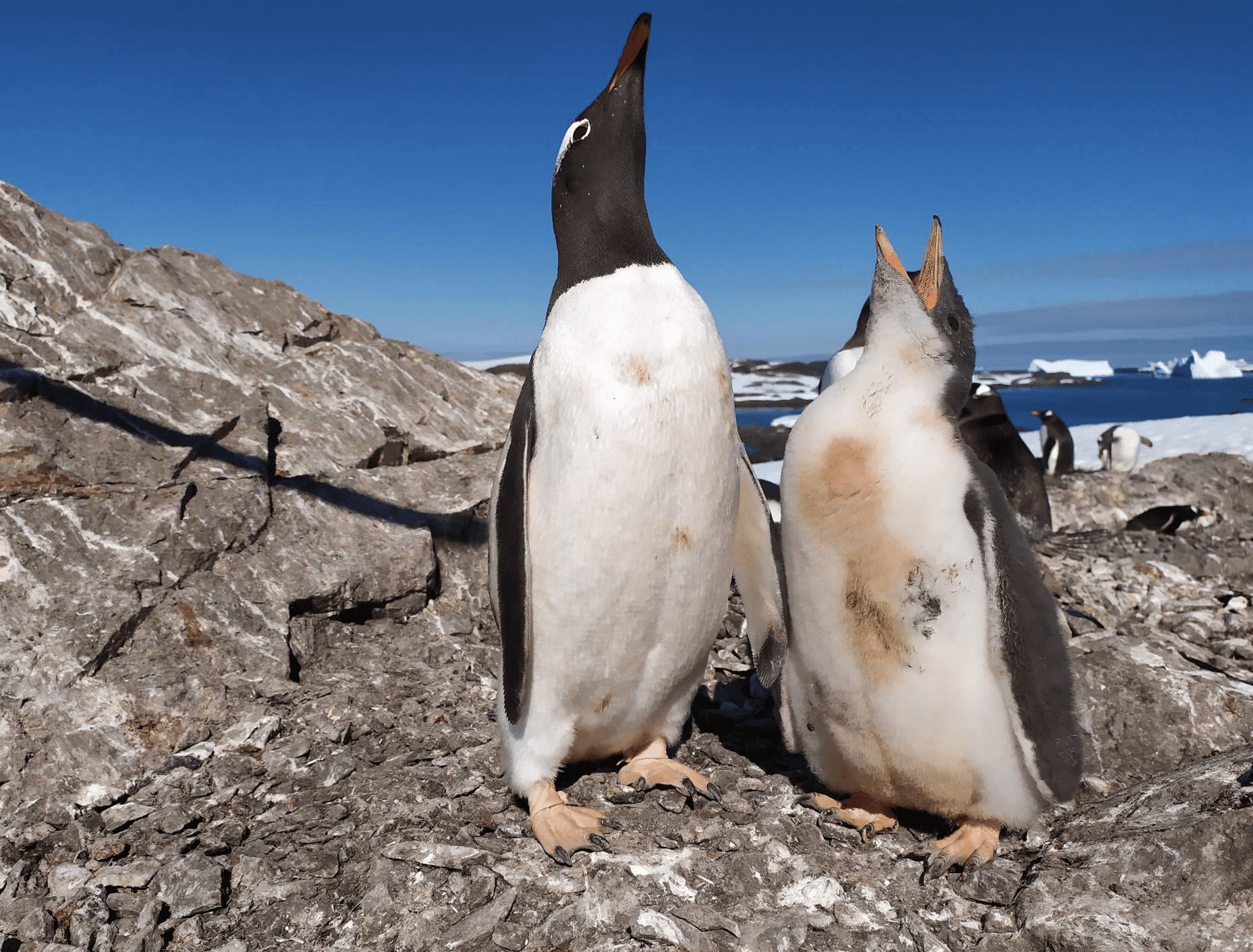 penguin Академік Вернадський