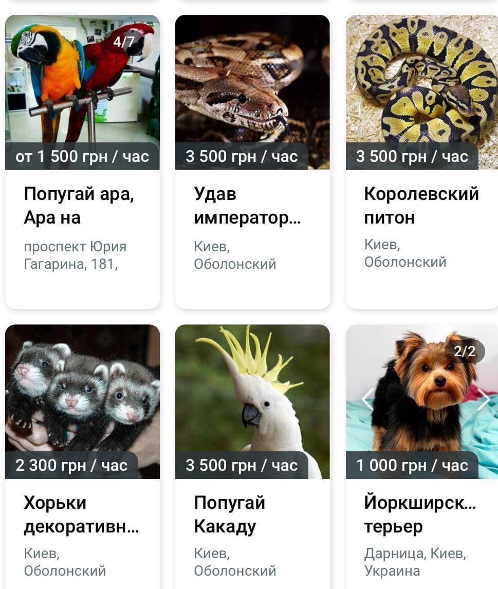 українські зоомагазини