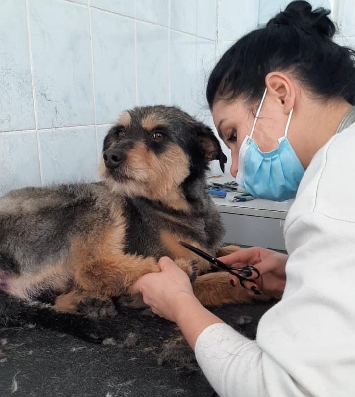 Тваринам, яких забиратимуть із муніципального притулку в Києві, безкоштовно робитимуть грумінг