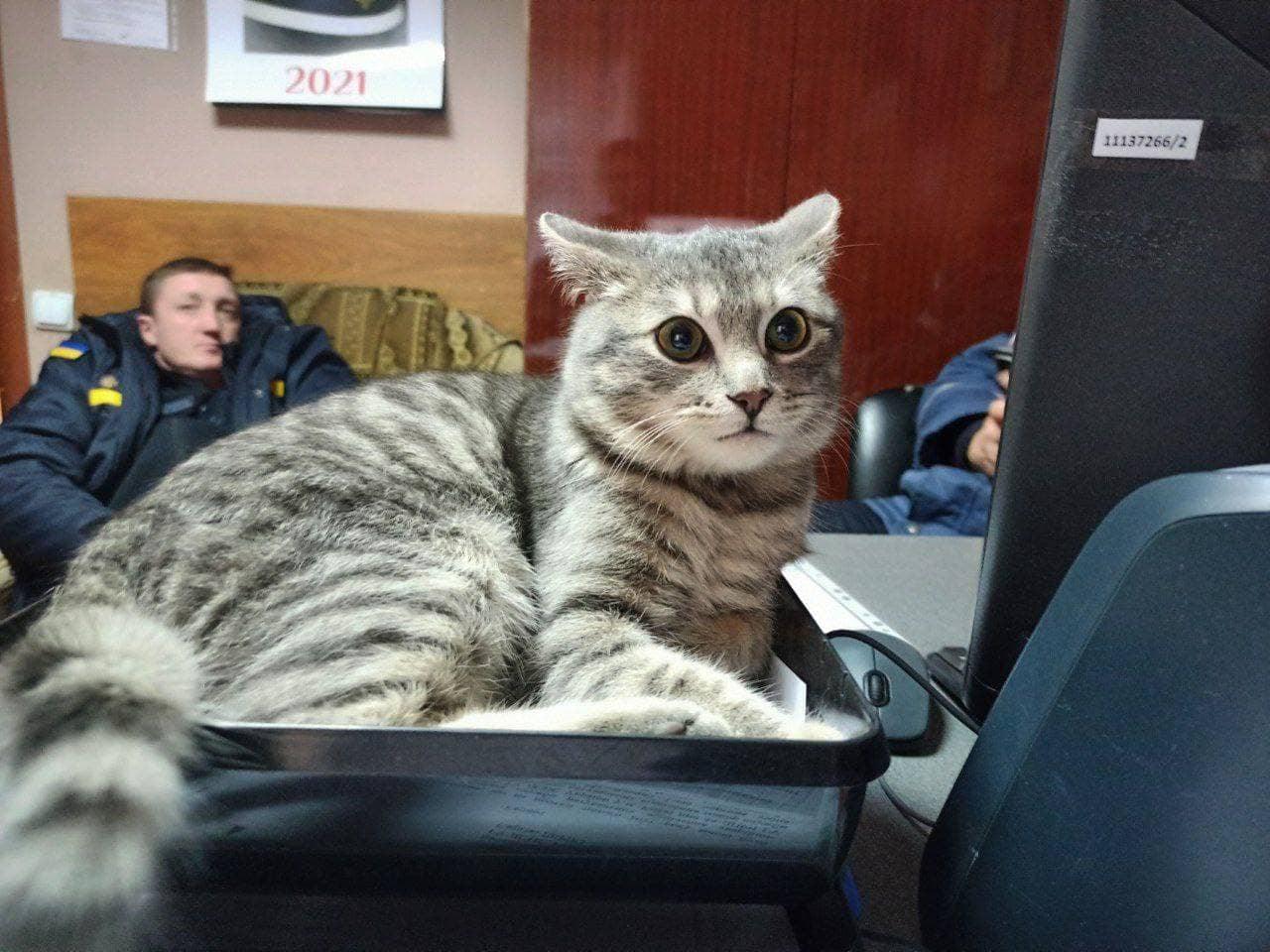кіт Чивас