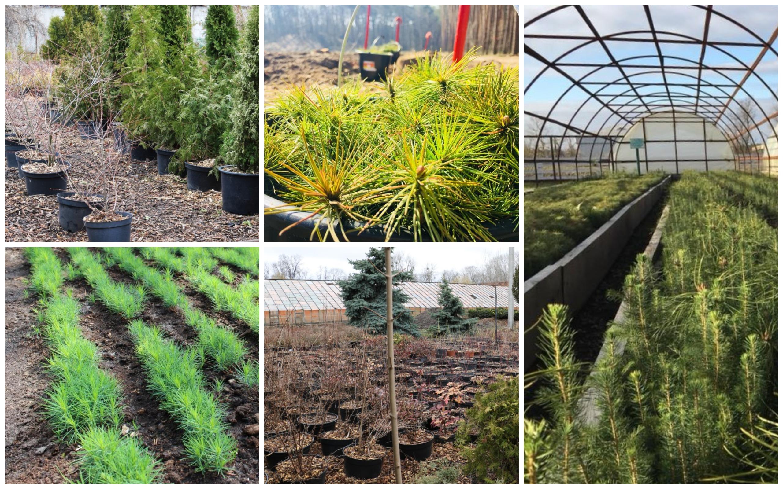 Тисяча дерев для висаджування в Житомирі