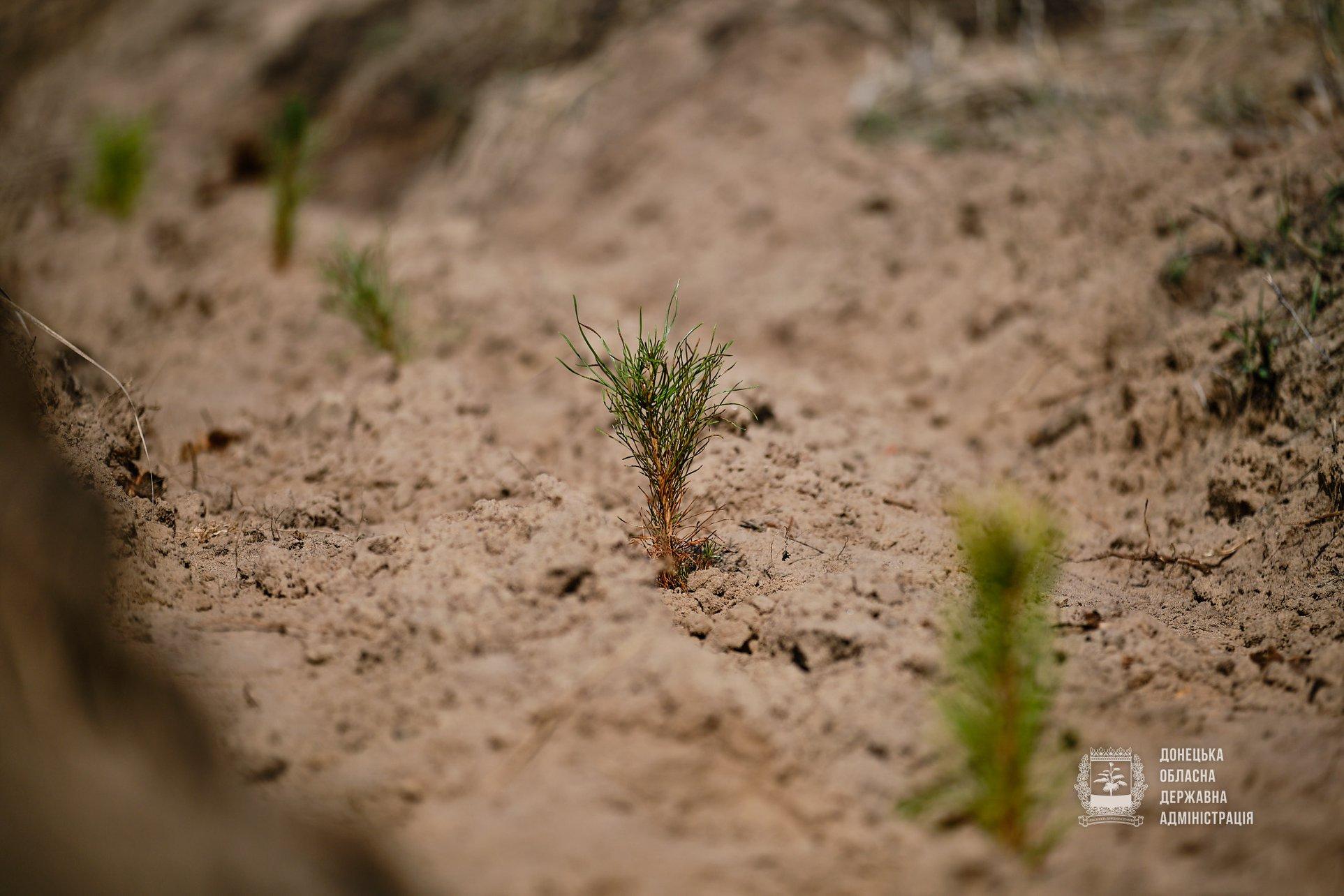 Озеленення планети Донеччина
