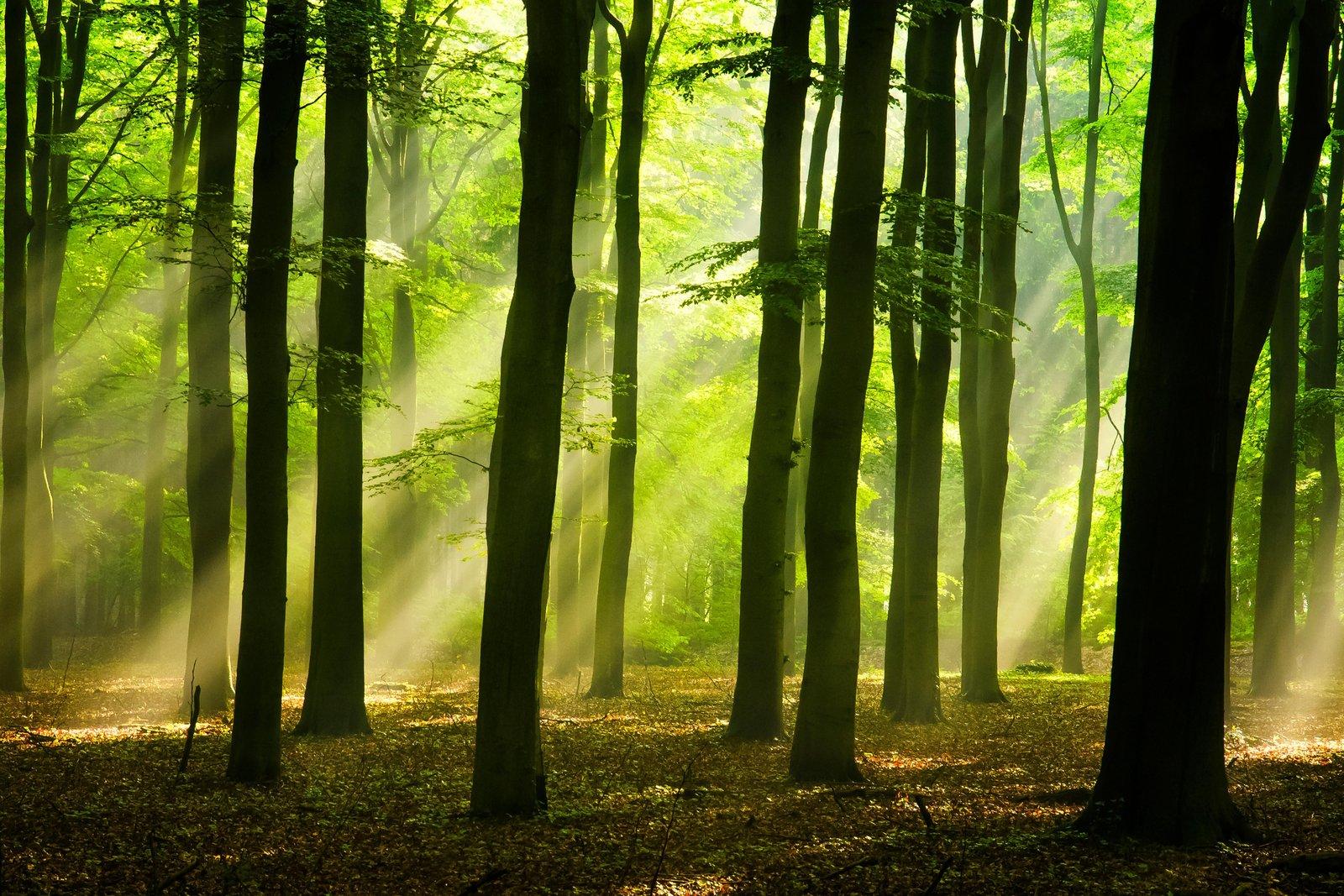 карпати ліси