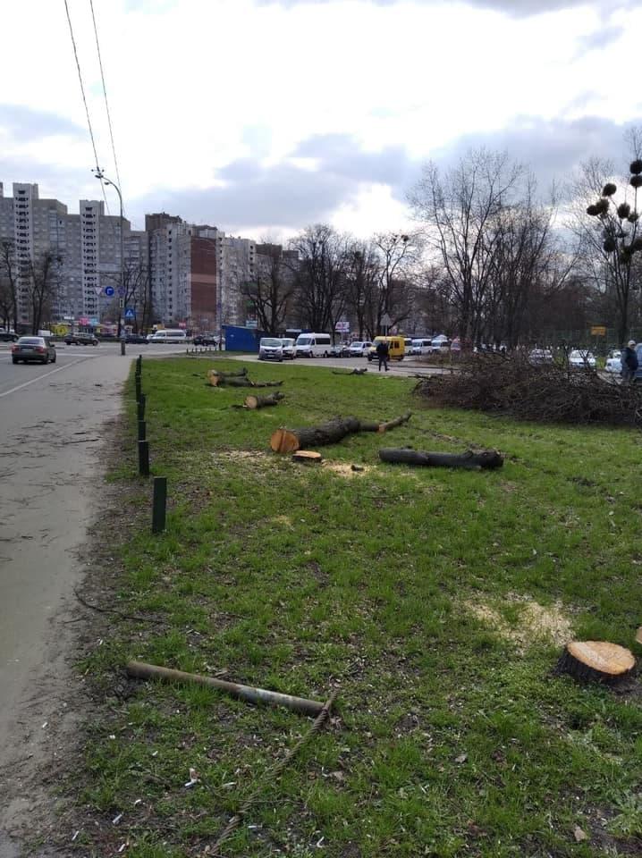 Спилювання дерев на Теремках
