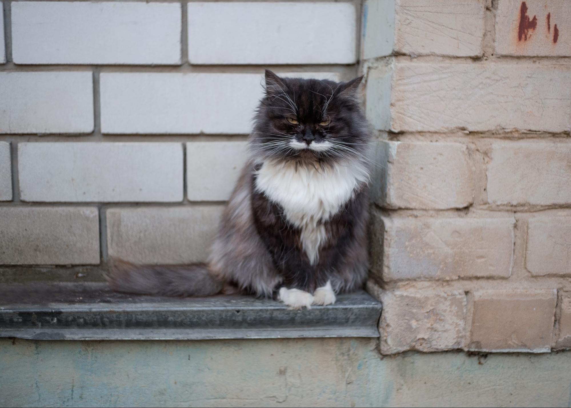 безпритульні коти