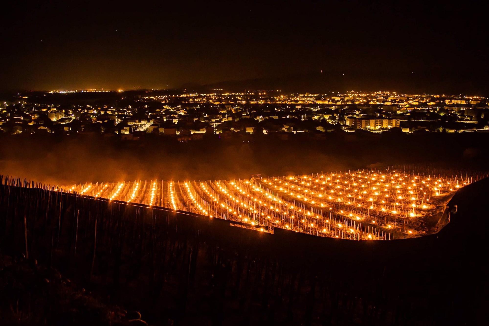 У Франції вогнищами зігрівають виноградники від весняних заморозків