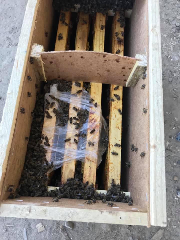 8 мільйонів бджіл