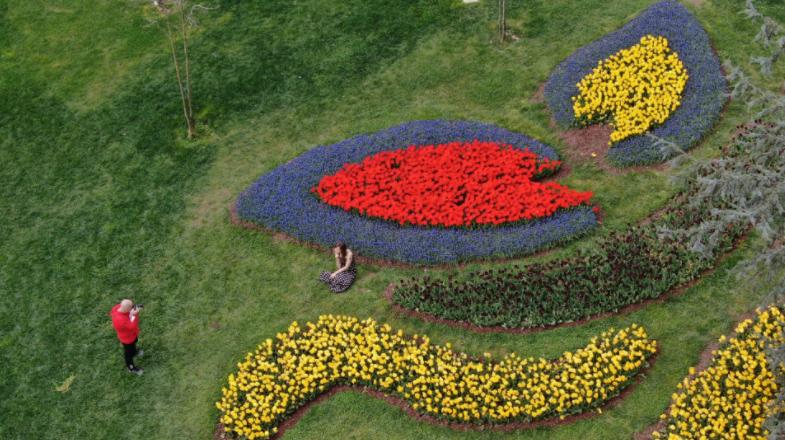 8 мільйонів тюльпанів