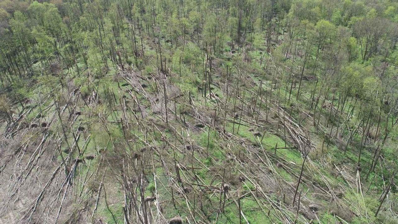 Буревій пошкодив ліс на Житомирщині