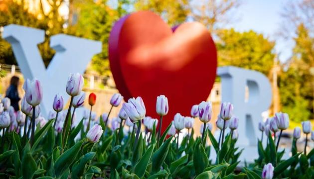 В Ужгороді квітнуть близько 30 тисяч тюльпанів 0