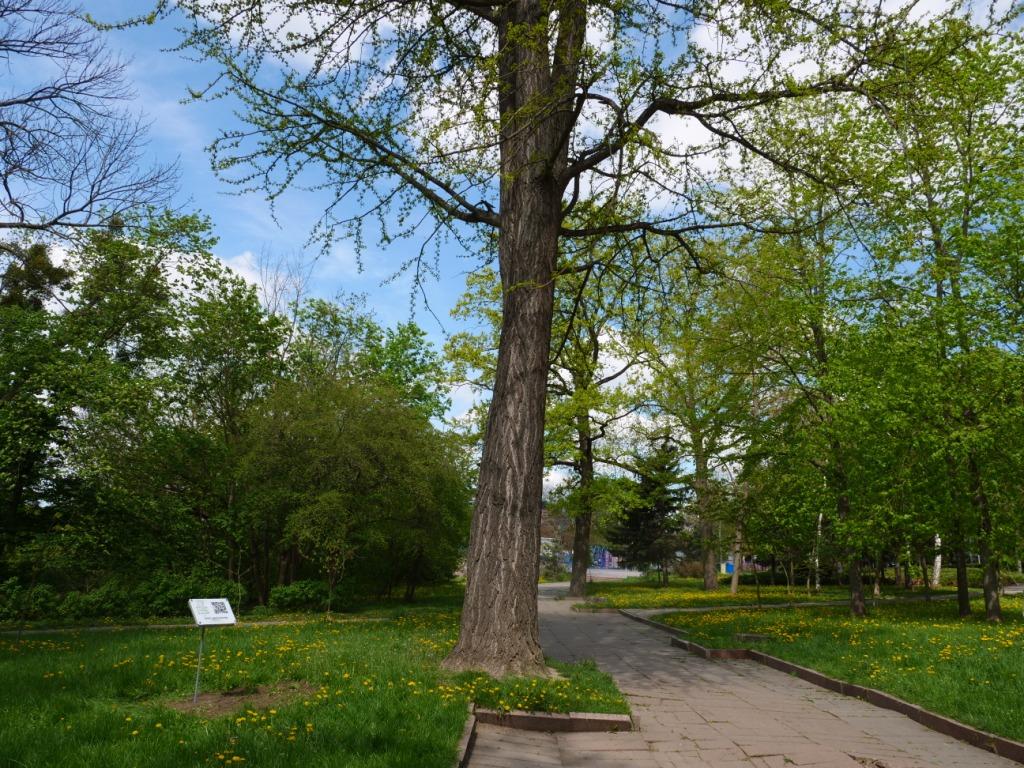 біля рідкісних дерев встановили таблички з QR-кодами10