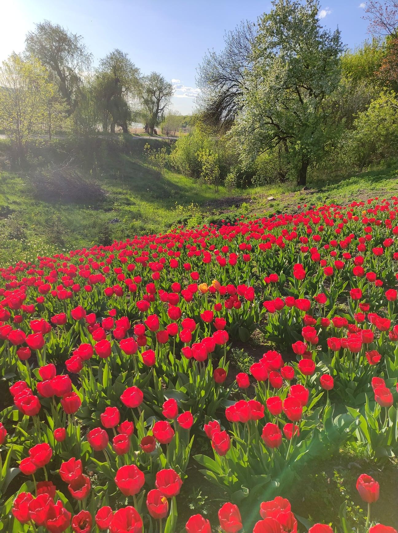 блокпост тюльпани