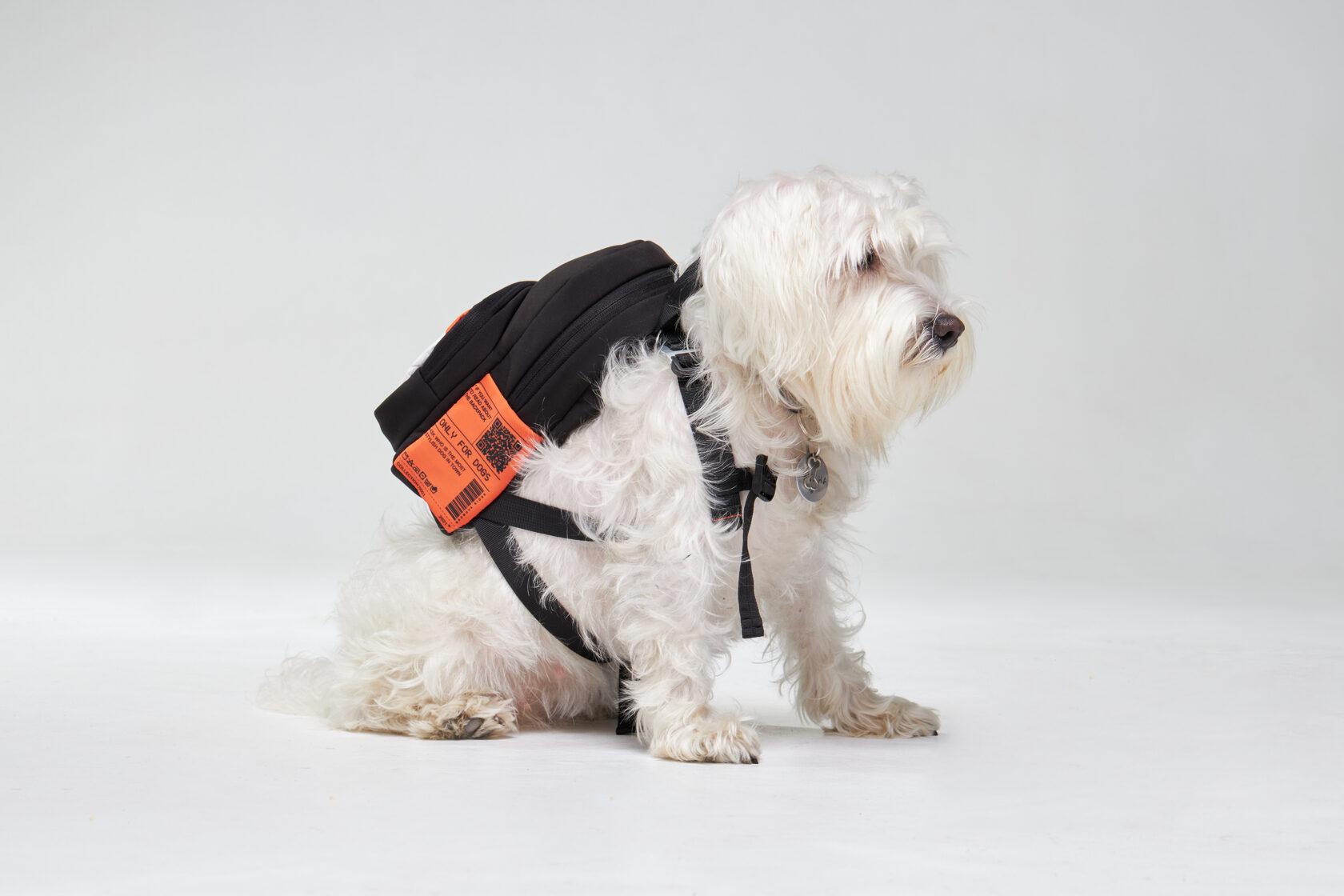 бренд рюкзаків для собак