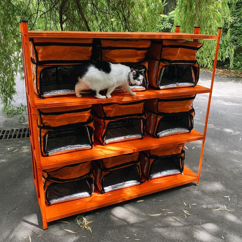 Дім для котів з рюкзаків