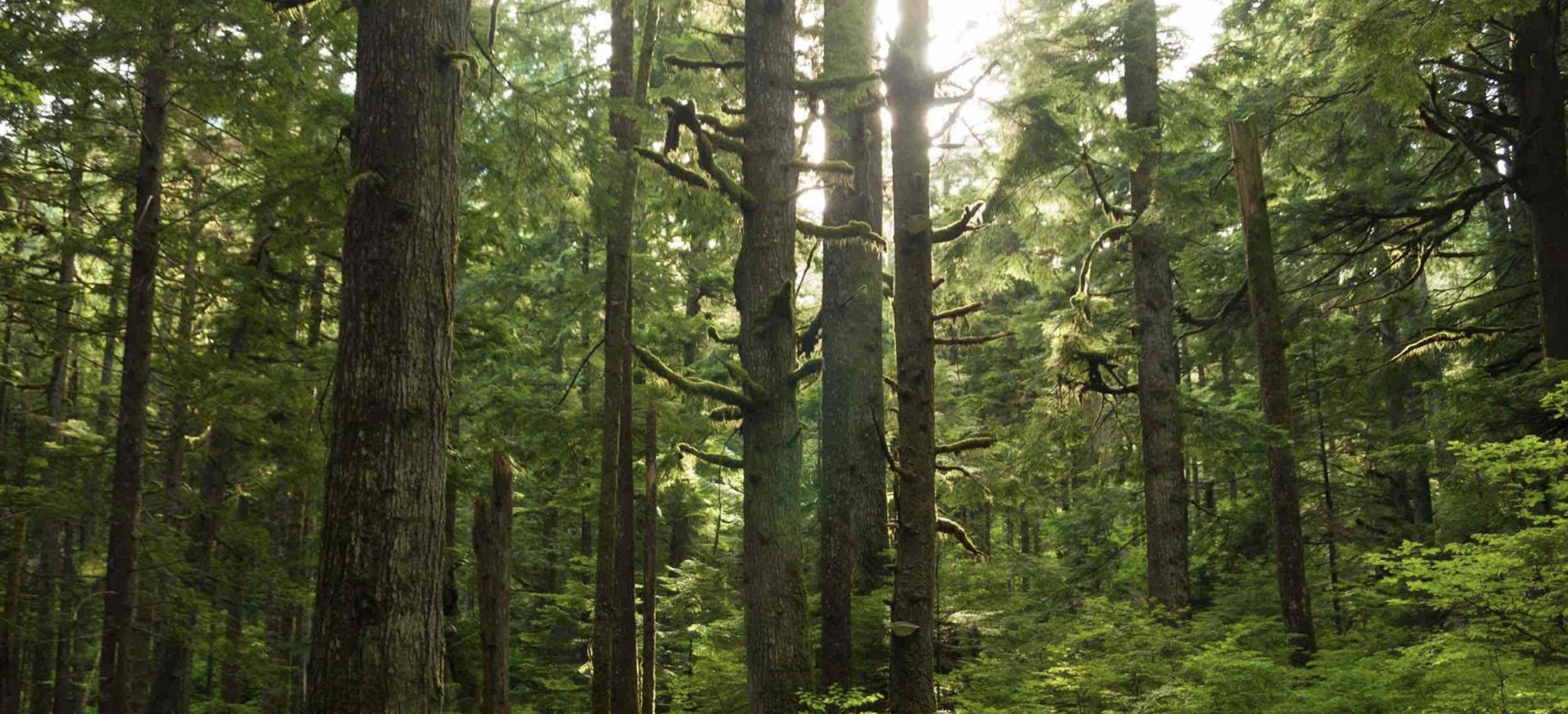 Як визначити, чи деревина, папір та інші продукти лісу є екологічно дружніми