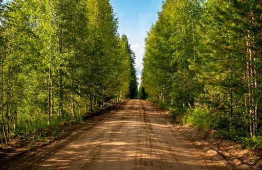 ліси житомирщині