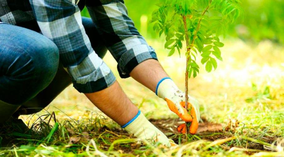Миллиард деревьев Зеленского
