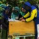 Why school kids need apiaries, or how social entrepreneurship educates children