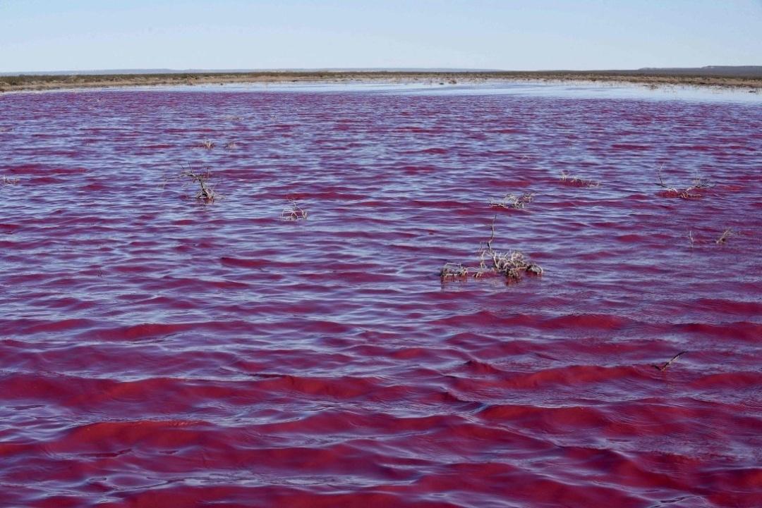 В Аргентині відходи пофарбували лагуну у буряковий